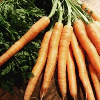 wortels-berber-bouma