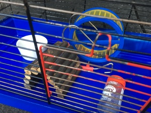 Hamsterkooi leeg