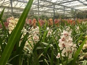 Orchideeën.jpg